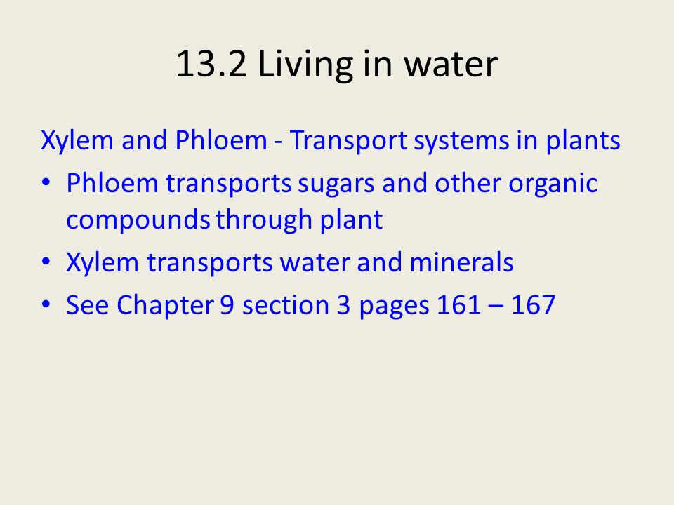 13.2 Living in water Xylem and Phloem - Transport systems in plants
