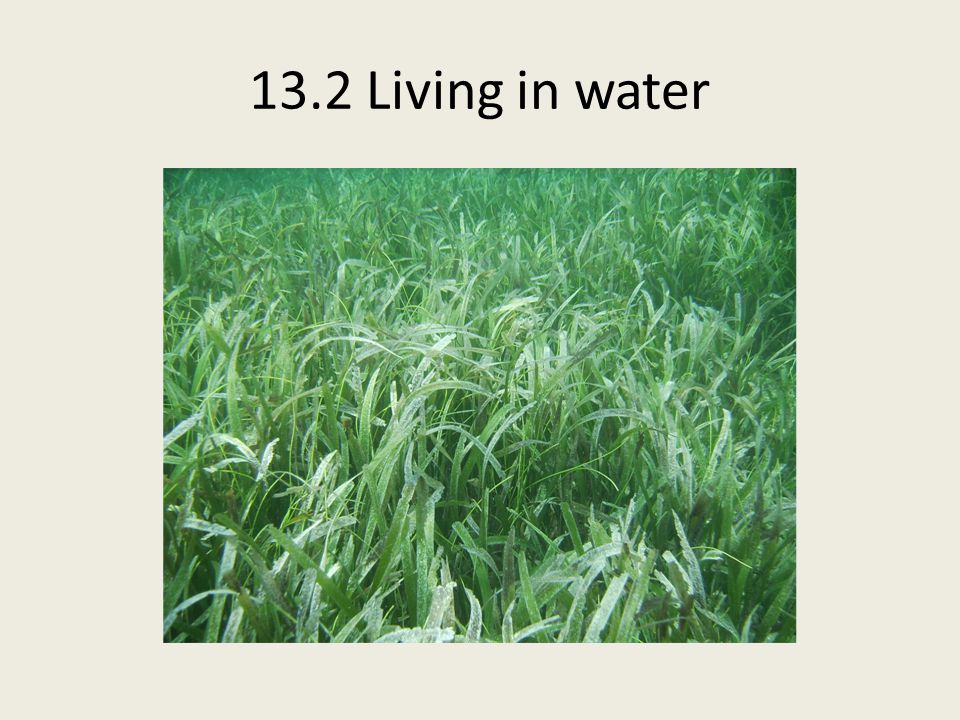 13.2 Living in water