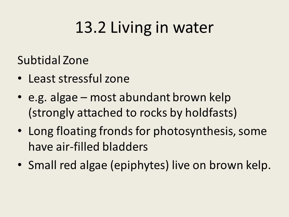 13.2 Living in water Subtidal Zone Least stressful zone