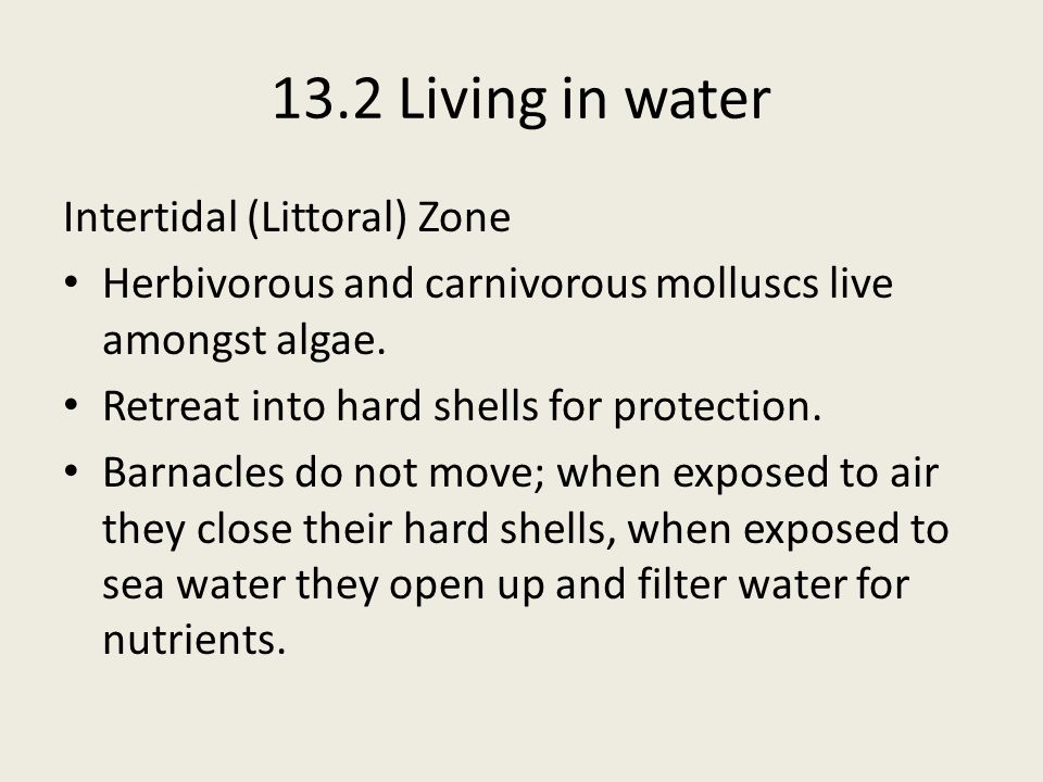 13.2 Living in water Intertidal (Littoral) Zone