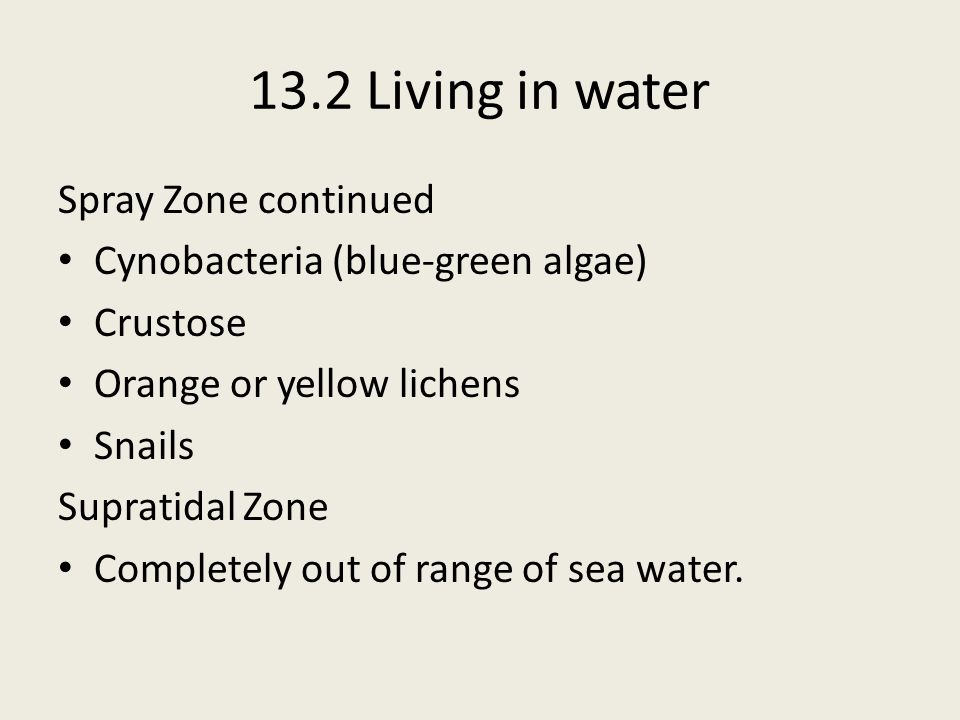 13.2 Living in water Spray Zone continued