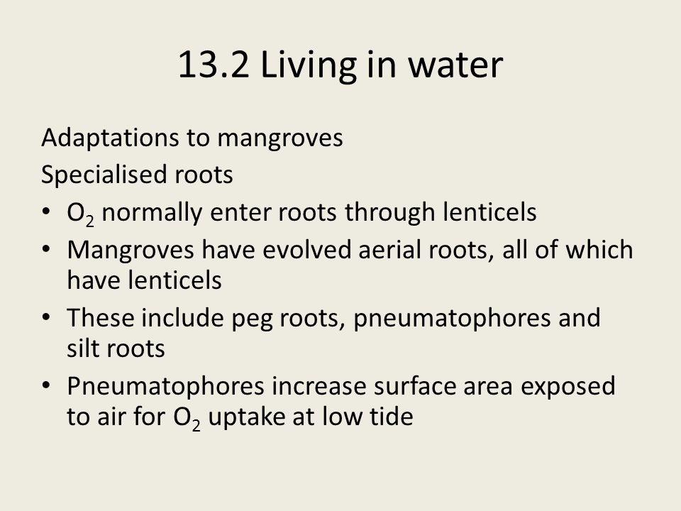 13.2 Living in water Adaptations to mangroves Specialised roots