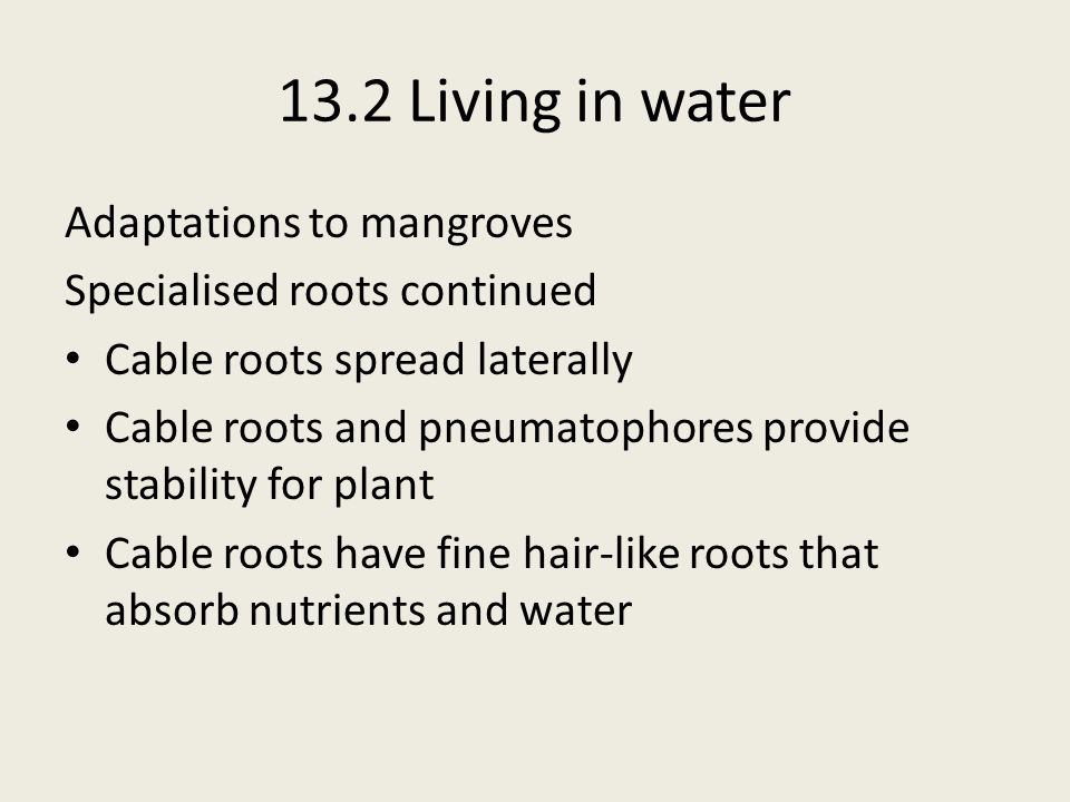 13.2 Living in water Adaptations to mangroves