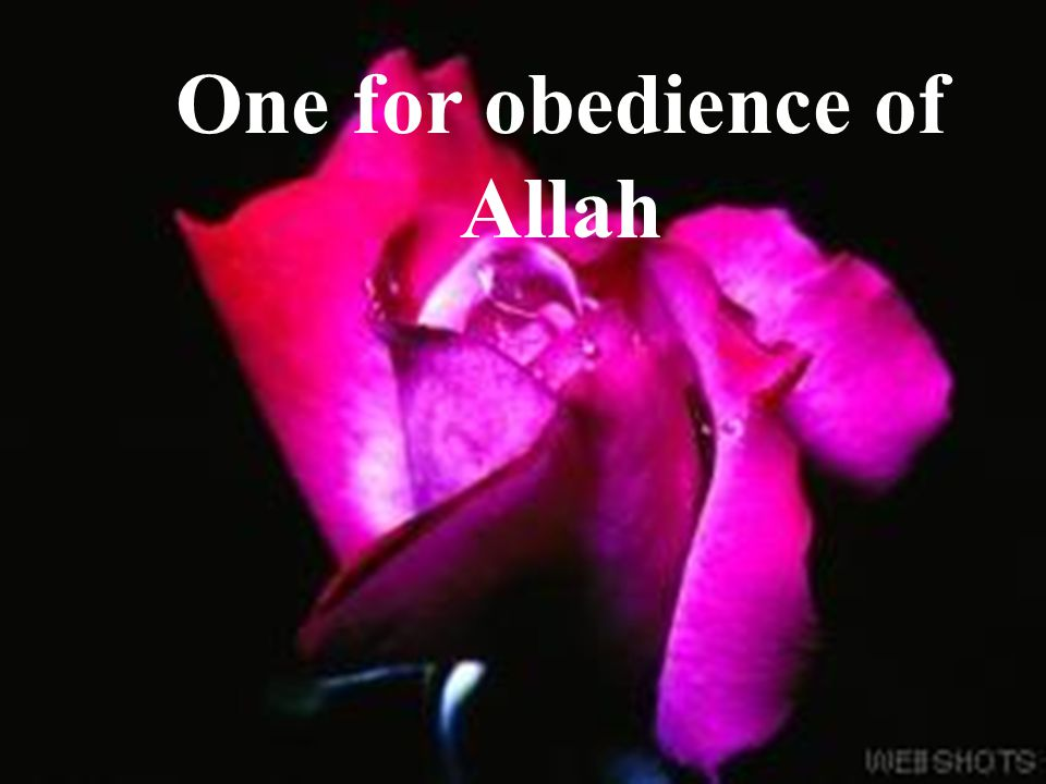 One for obedience of Allah