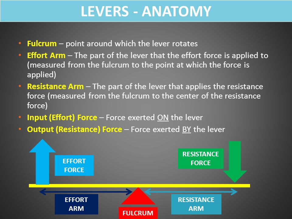 LEVERS - ANATOMY Fulcrum – point around which the lever rotates