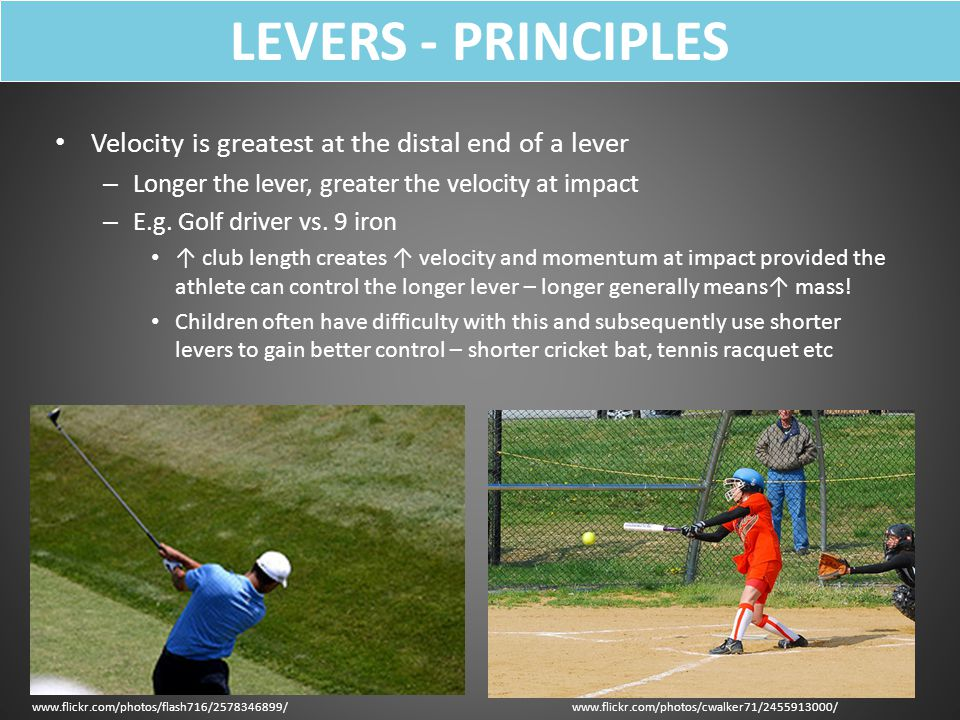 LEVERS - PRINCIPLES Velocity is greatest at the distal end of a lever