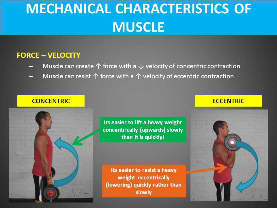 MECHANICAL CHARACTERISTICS OF MUSCLE
