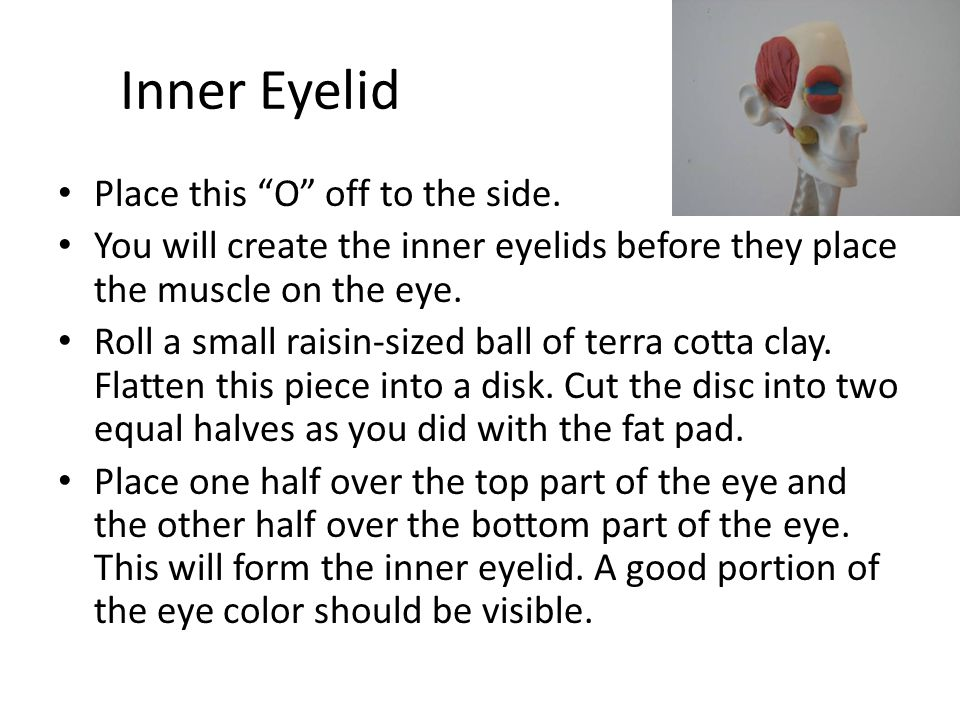 Inner Eyelid Place this O off to the side.