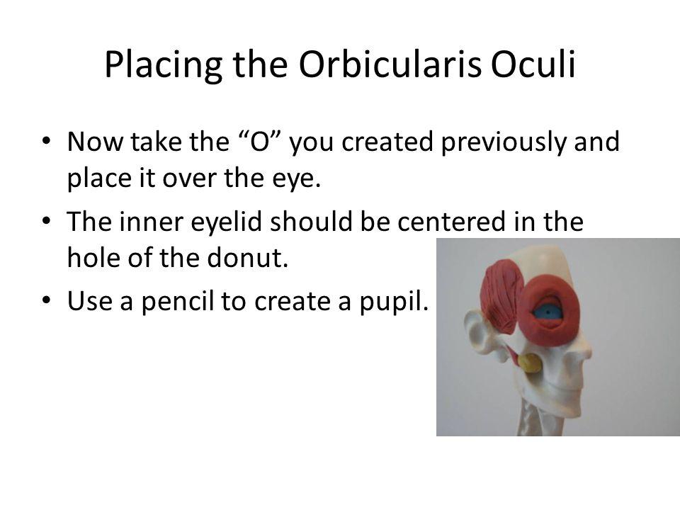 Placing the Orbicularis Oculi