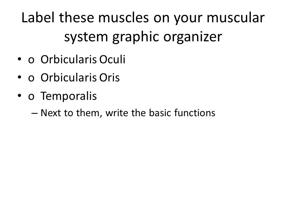 Label these muscles on your muscular system graphic organizer