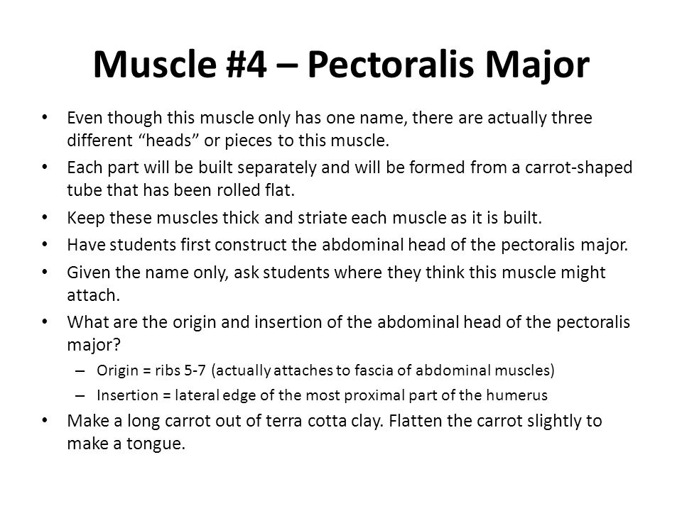 Muscle #4 – Pectoralis Major