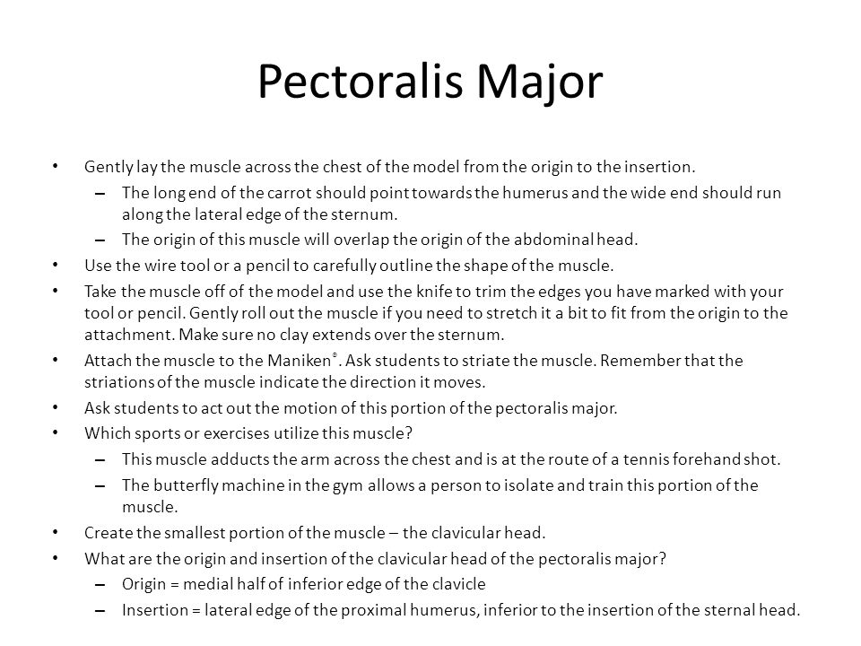 Pectoralis Major Gently lay the muscle across the chest of the model from the origin to the insertion.