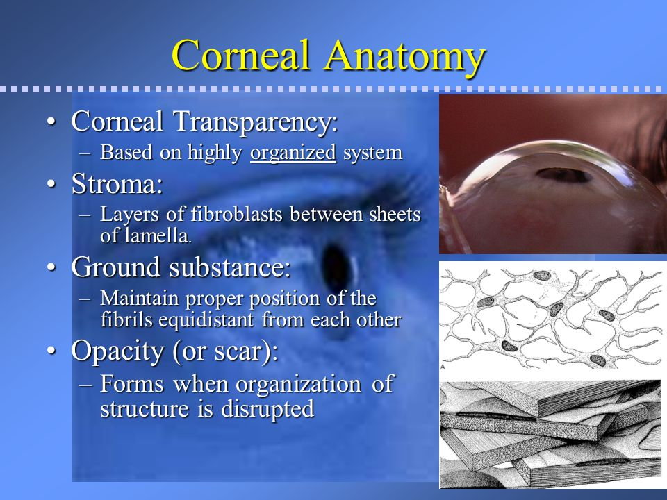 Corneal Anatomy Corneal Transparency: Stroma: Ground substance: