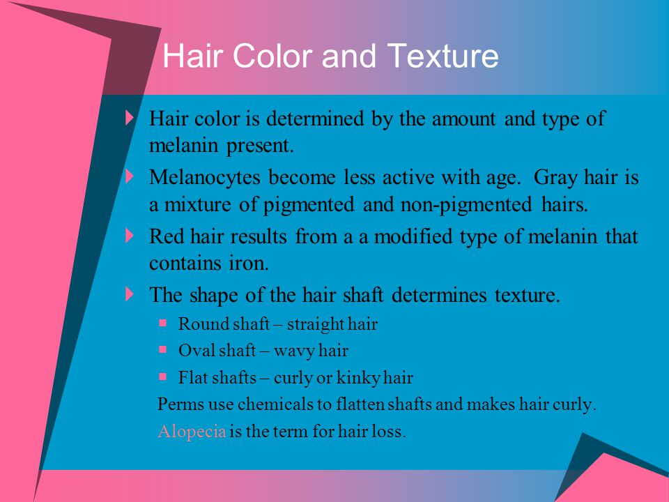 Hair Color and Texture Hair color is determined by the amount and type of melanin present.