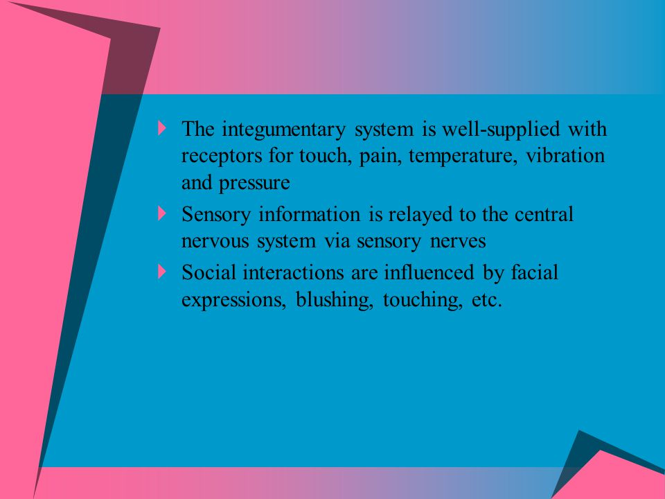 The integumentary system is well-supplied with receptors for touch, pain, temperature, vibration and pressure