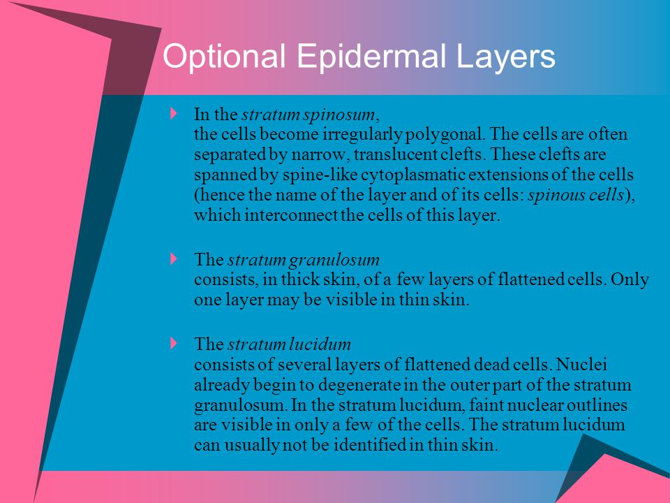 Optional Epidermal Layers