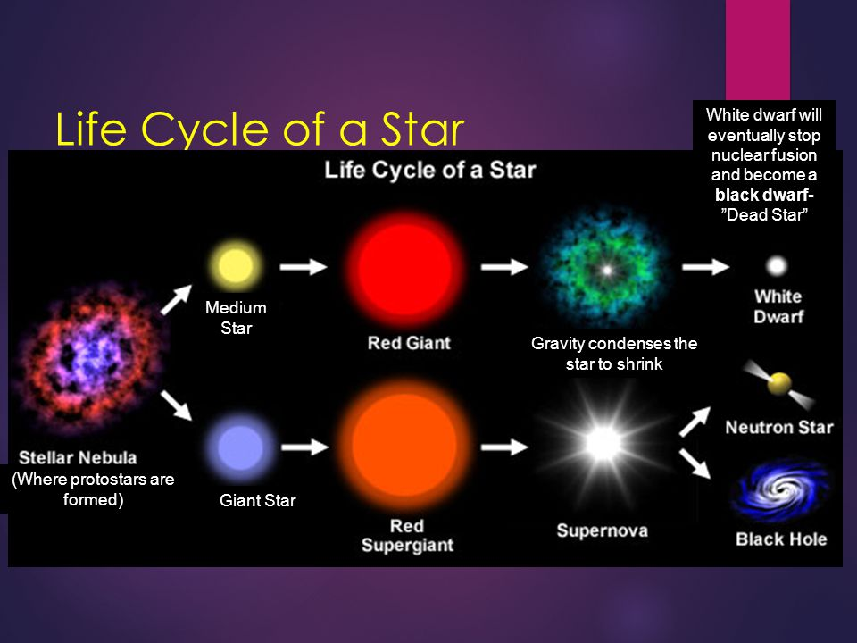 Life Cycle of a Star White dwarf will eventually stop nuclear fusion and become a black dwarf- Dead Star