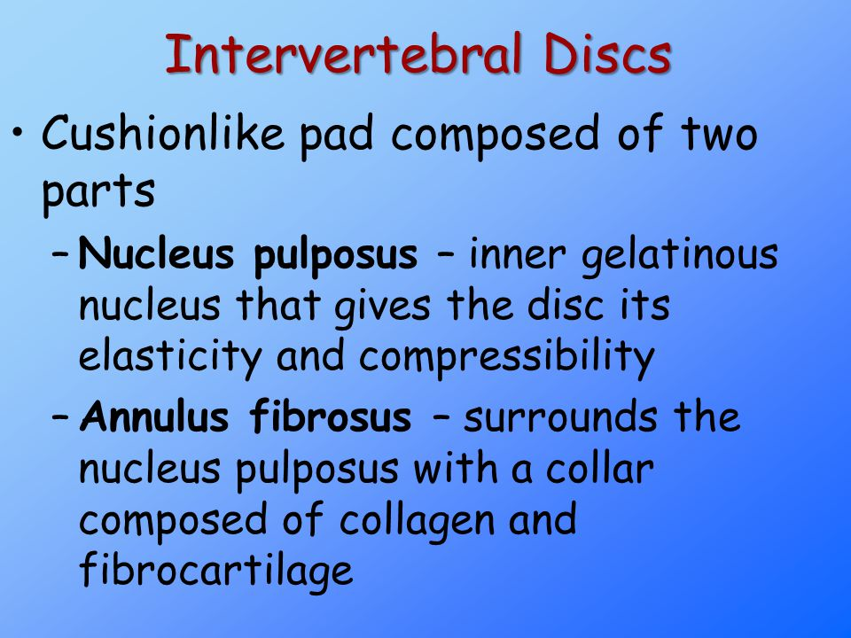 Intervertebral Discs Cushionlike pad composed of two parts