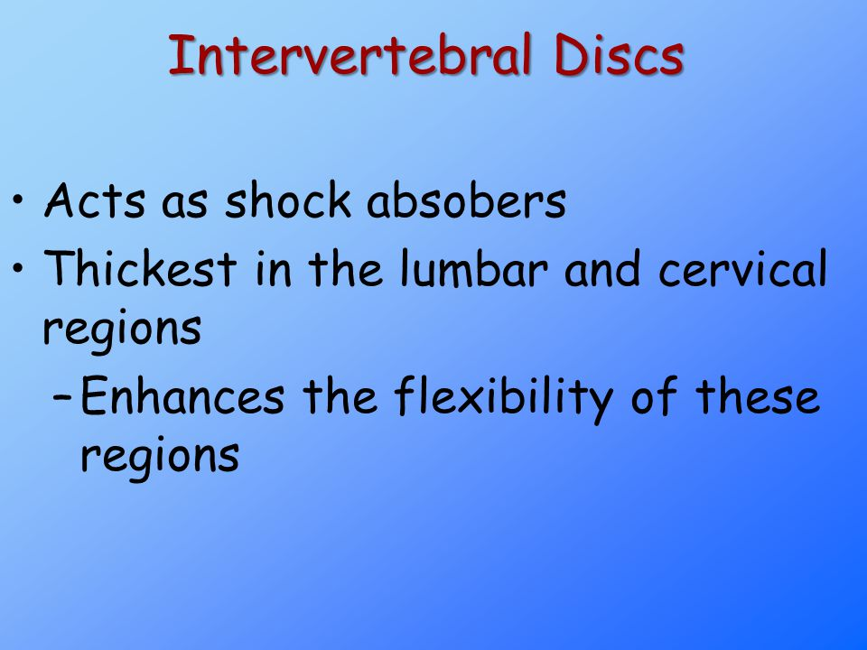 Intervertebral Discs Acts as shock absobers