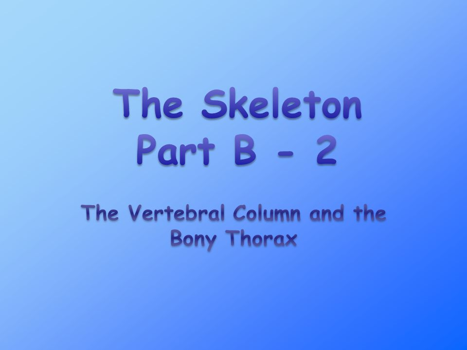 The Vertebral Column and the Bony Thorax