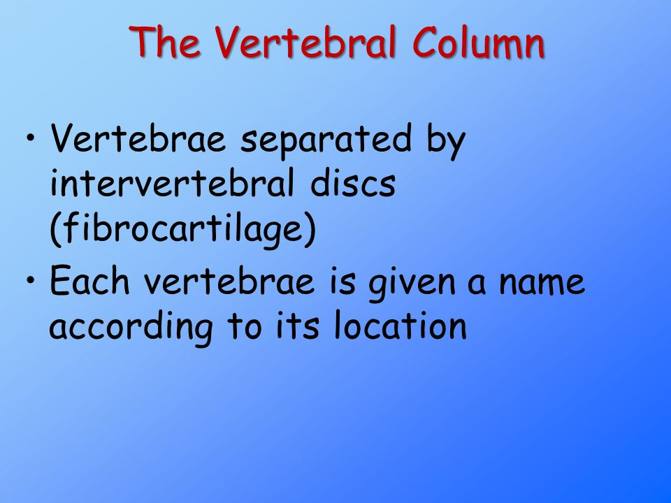 The Vertebral Column Vertebrae separated by intervertebral discs (fibrocartilage) Each vertebrae is given a name according to its location.