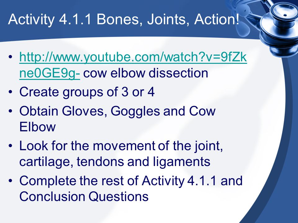 Activity 4.1.1 Bones, Joints, Action!