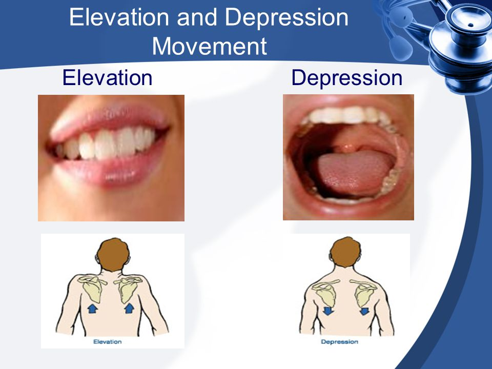 Elevation and Depression Movement