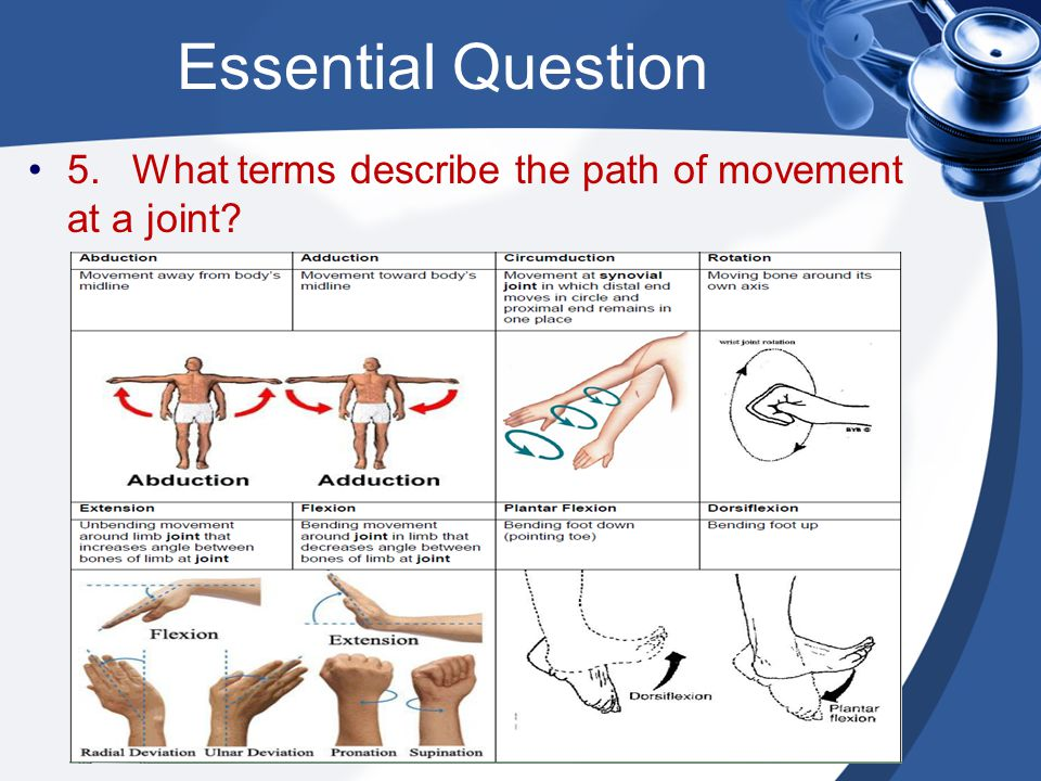 Essential Question 5. What terms describe the path of movement at a joint