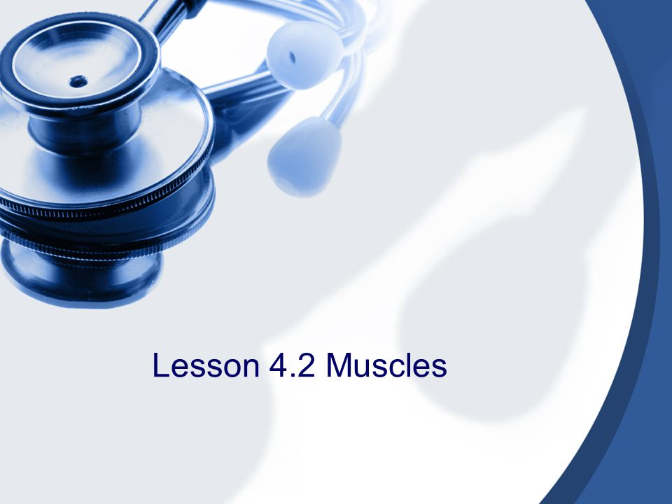 Lesson 4.2 Muscles