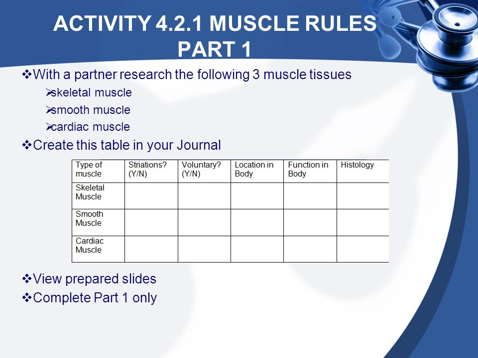 Activity 4.2.1 Muscle Rules Part 1