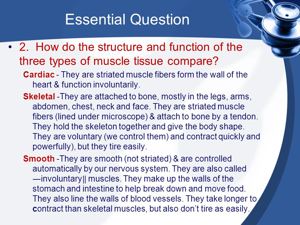 Essential Question 2. How do the structure and function of the three types of muscle tissue compare