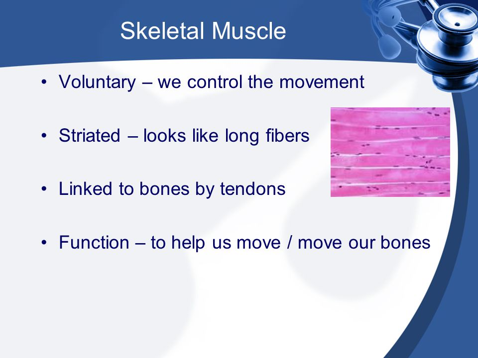 Skeletal Muscle Voluntary – we control the movement