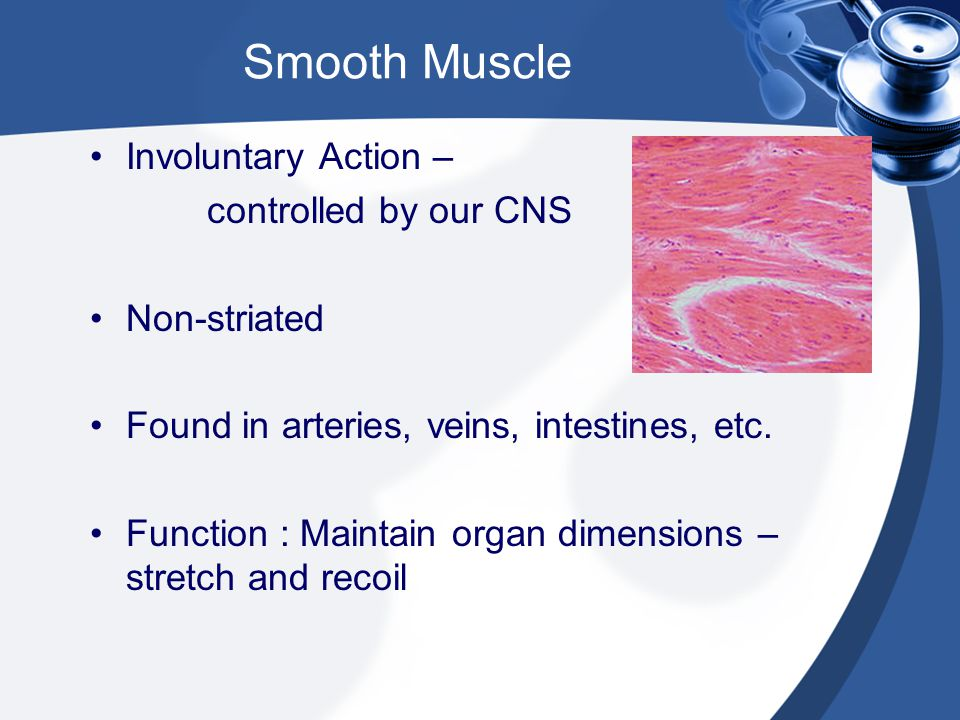 Smooth Muscle Involuntary Action – controlled by our CNS Non-striated