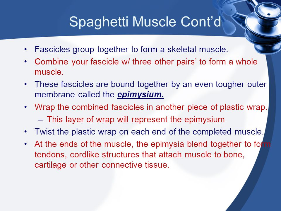 Spaghetti Muscle Cont'd