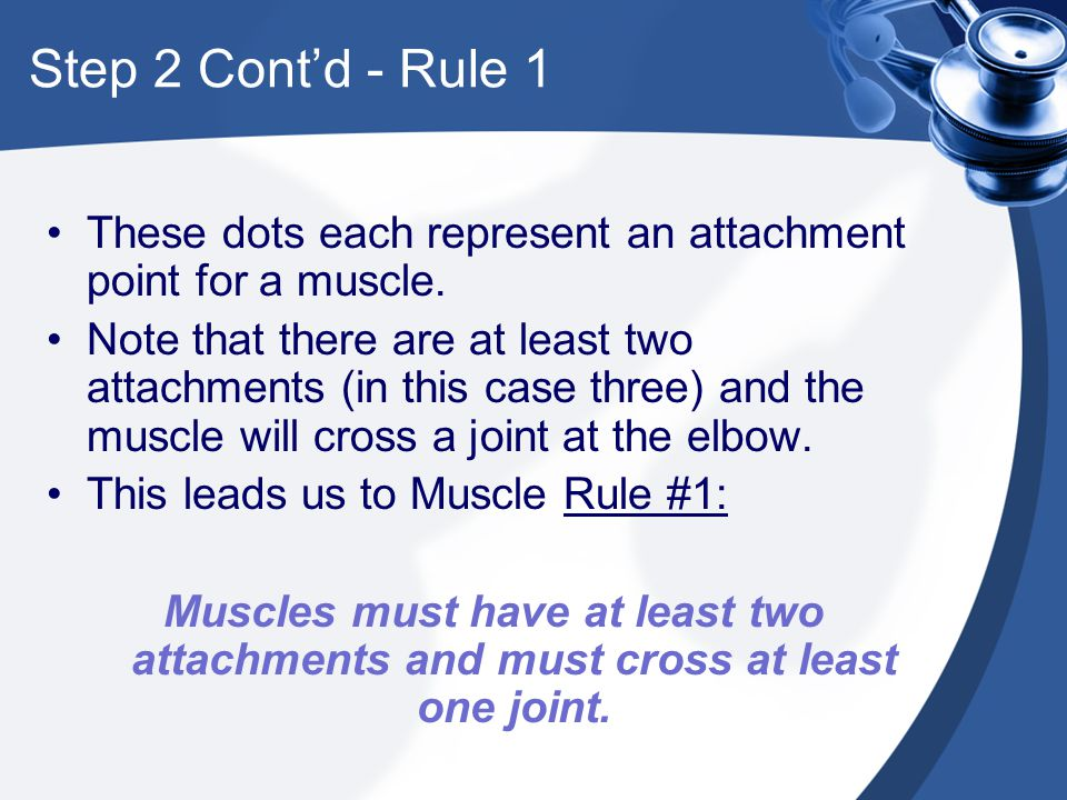 Step 2 Cont'd - Rule 1 These dots each represent an attachment point for a muscle.