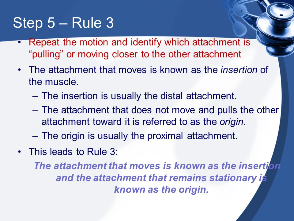 Step 5 – Rule 3 Repeat the motion and identify which attachment is pulling or moving closer to the other attachment.