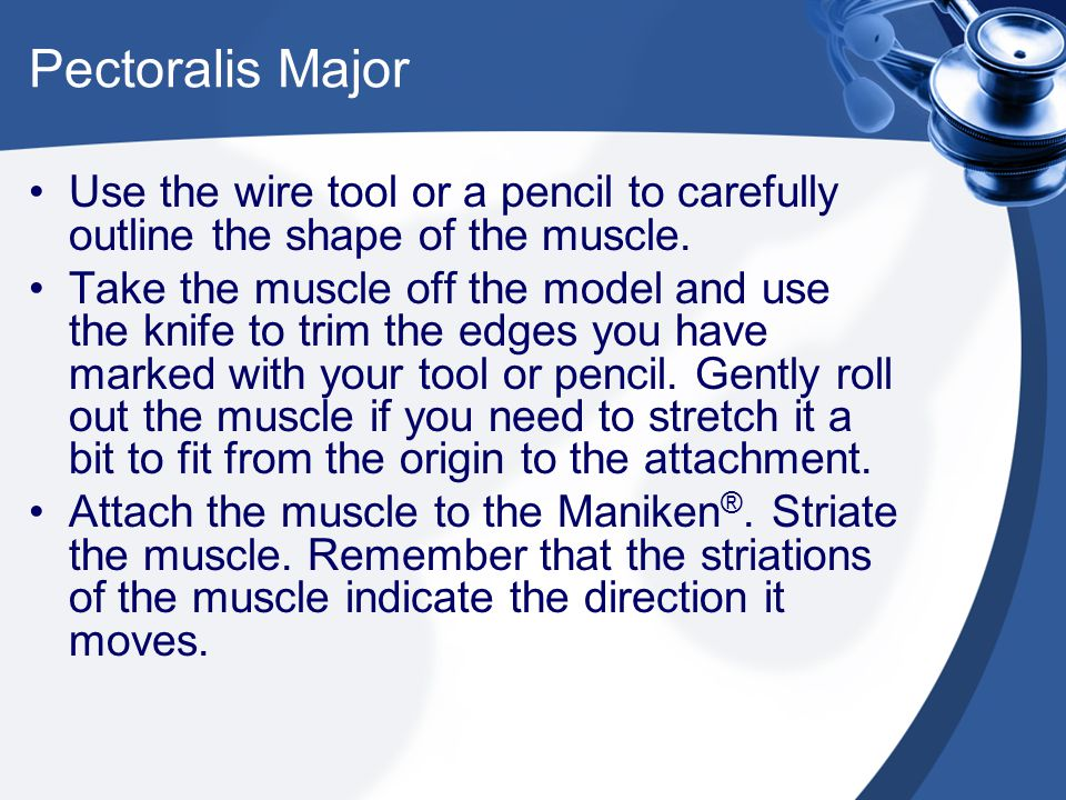 Pectoralis Major Use the wire tool or a pencil to carefully outline the shape of the muscle.