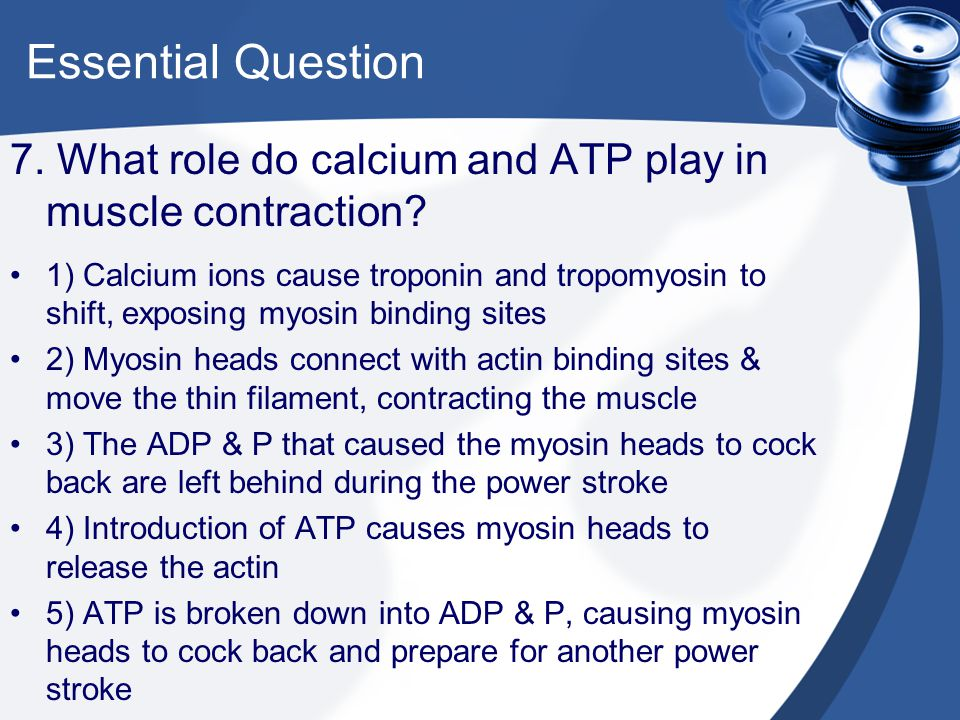Essential Question 7. What role do calcium and ATP play in muscle contraction