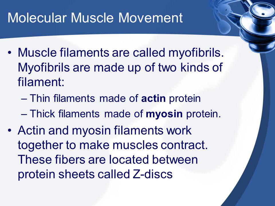 Molecular Muscle Movement