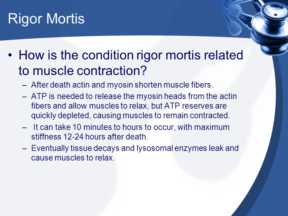 Rigor Mortis How is the condition rigor mortis related to muscle contraction After death actin and myosin shorten muscle fibers.
