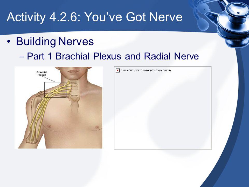Activity 4.2.6: You've Got Nerve