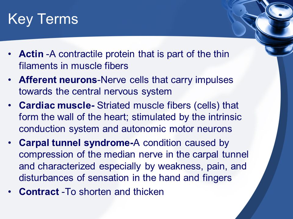 Key Terms Actin -A contractile protein that is part of the thin filaments in muscle fibers.