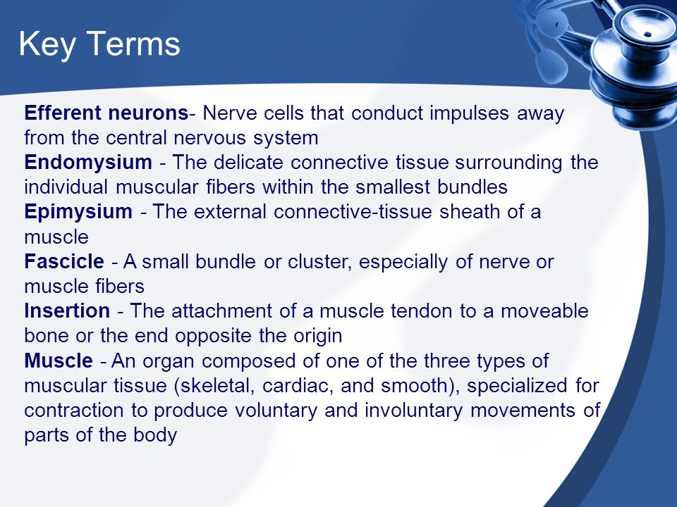 Key Terms Efferent neurons- Nerve cells that conduct impulses away from the central nervous system.