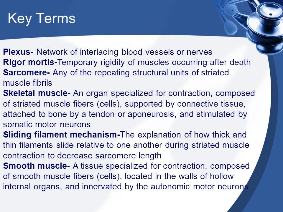 Key Terms Plexus- Network of interlacing blood vessels or nerves