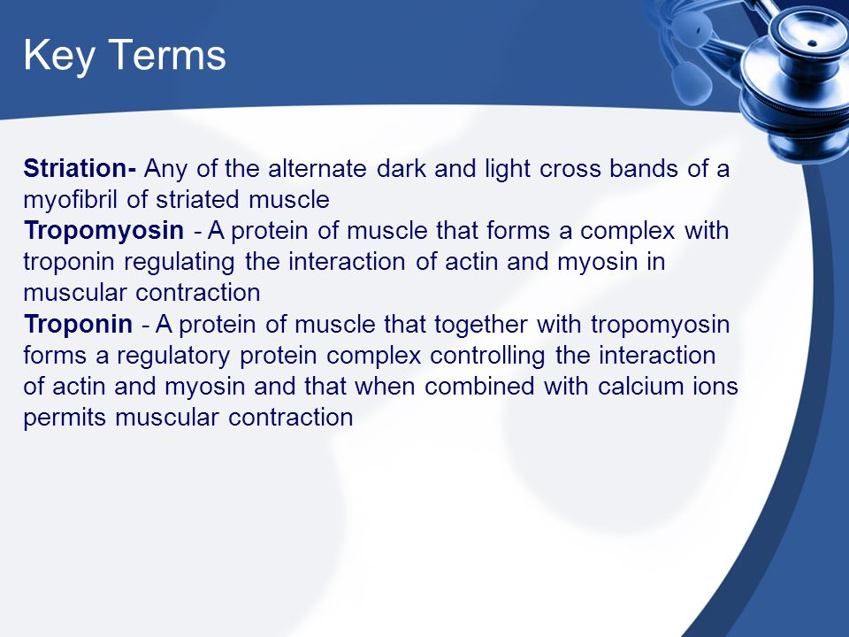 Key Terms Striation- Any of the alternate dark and light cross bands of a myofibril of striated muscle.