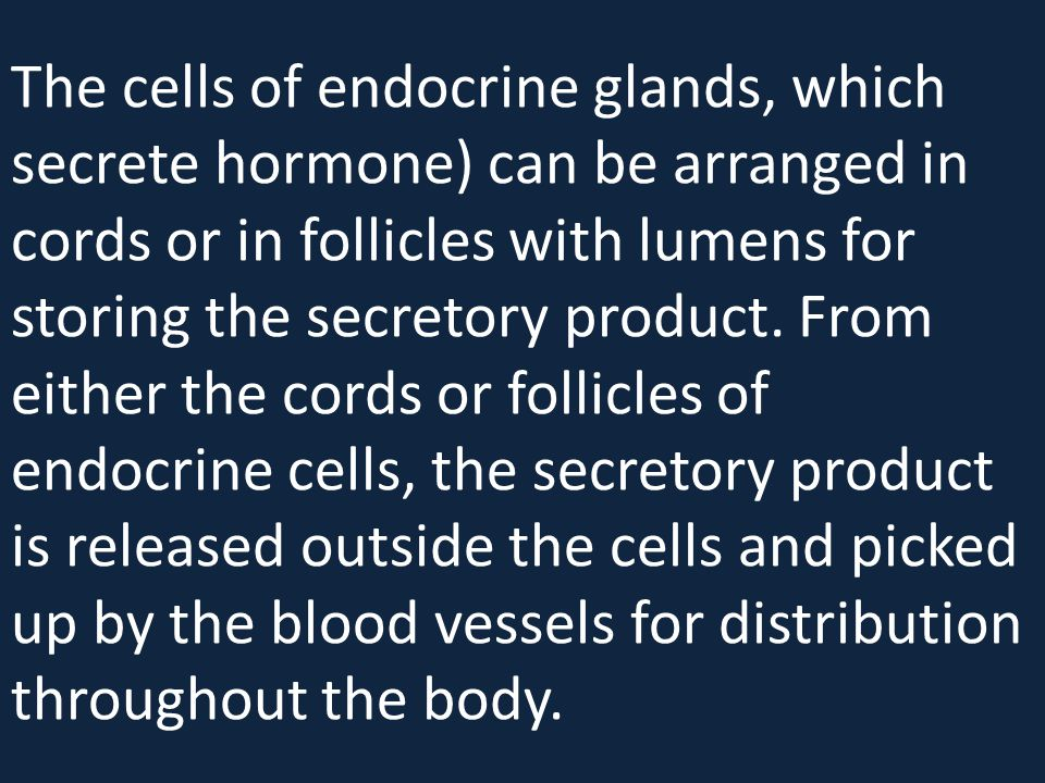 The cells of endocrine glands, which secrete hormone) can be arranged in cords or in follicles with lumens for storing the secretory product.