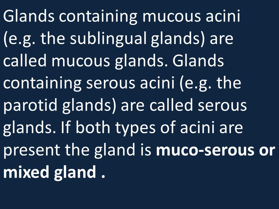 Glands containing mucous acini (e. g