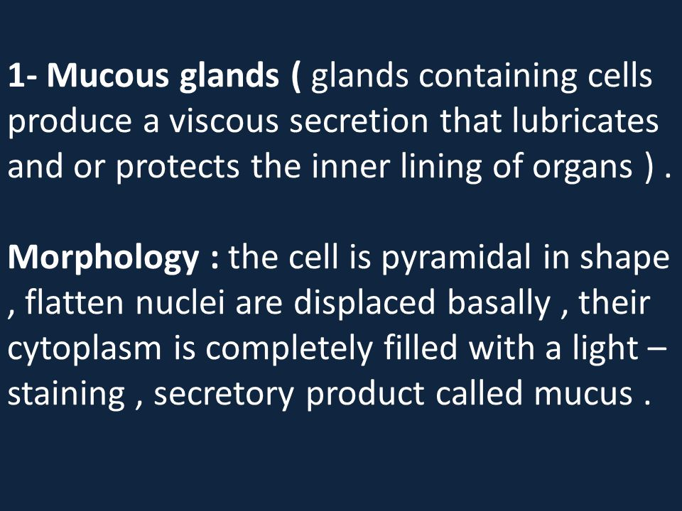 1- Mucous glands ( glands containing cells produce a viscous secretion that lubricates and or protects the inner lining of organs ) .