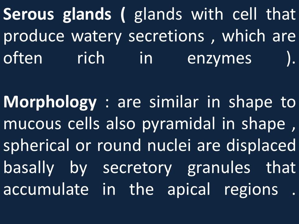 Serous glands ( glands with cell that produce watery secretions , which are often rich in enzymes ).
