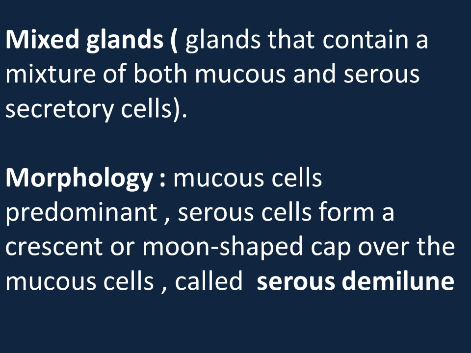 Mixed glands ( glands that contain a mixture of both mucous and serous secretory cells).